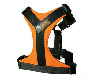 OnDoing Dog Harness ( Orange ) XL