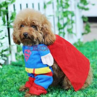 Puppy Superman outfit