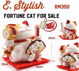 Fortune cat for sale