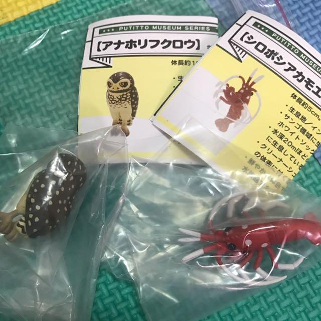 日本水族館限定扭蛋 轉蛋