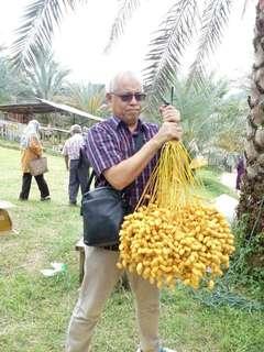 Kavling kampung kurma investasi menghasilkan ratusan juta rupiah