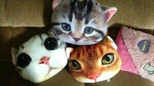 #MakinTebel Boneka kucing