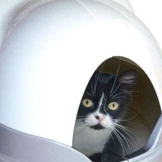 🚚 貓砂自動清洗 貓砂盆