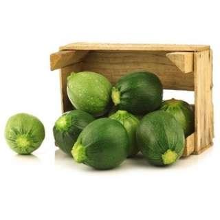 Zucchini 'Di Nizza' (Cucurbita Pepo L.) Vegetable Heirloom, 12-16 Seeds