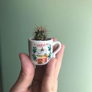 Baby Cactus In Mini Cup Super Cute! :3