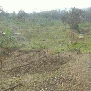Kavling perkebunan yang mengutungkan