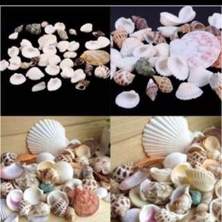 Cheap seashells