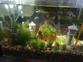 Any plants to buyand free beautiful Guppies give away