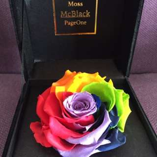 Moss McBlack everlasting rose (rainbow colour)