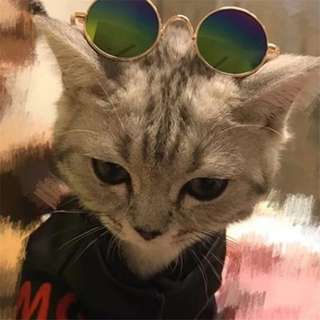 Lovely Pet puppy kitten sunglasses Fashion Cat Sunglasses Pet Accessories Summer Dogs Cats Glasses Grooming random color