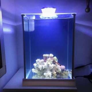 Innovative Marine Fish Tank Aquarium Fluval Spec 3 White With Aluminium Frame & Light (Brightwell Aquatics Zooplankton, Phytochrom & Seachem Buffer) Accessories Dripper & Isolation Unit