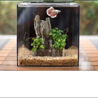 EcoQubeC Aquarium - Desktop Betta Fish Tank For Living Office And Home Décor (Light Not Included)