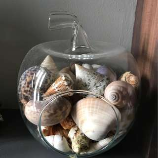 Seashells Terrarium Glass Apple Pear Gardening Flora Plants