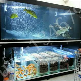 Large Fish Tank with Sump 6' x 2.5' x 2.5'