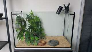 2 feet glass tank for pets