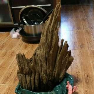魚缸大沉木