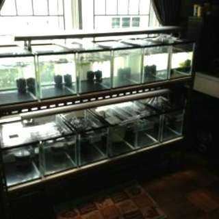 Fish Breeding Tank Setup - 12pcs 1 feet tanks + rack and lights