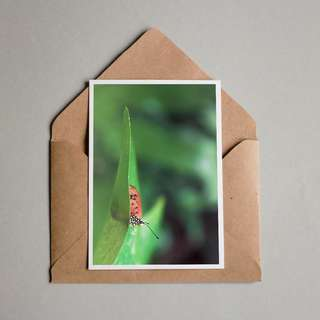 Butterfly Photography Postcard