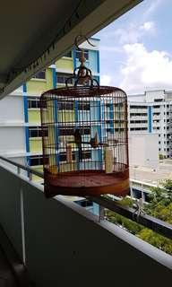 Shama cage 23