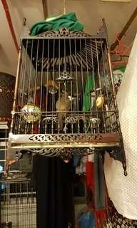 Jambul cage