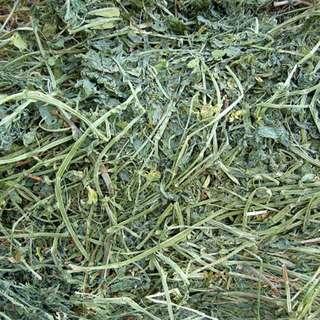 Alfalfa Hay from US