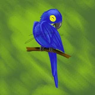 Hyacinth Macaw Stickers