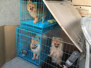 Used quality collapsable dog cage (Pet crate)