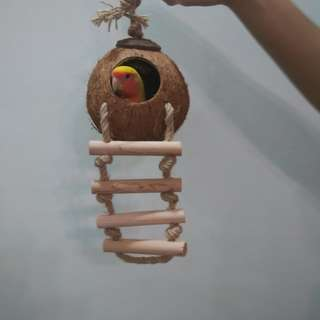 (Instock) Coconut n Ladder Foraging Fun for small parrots