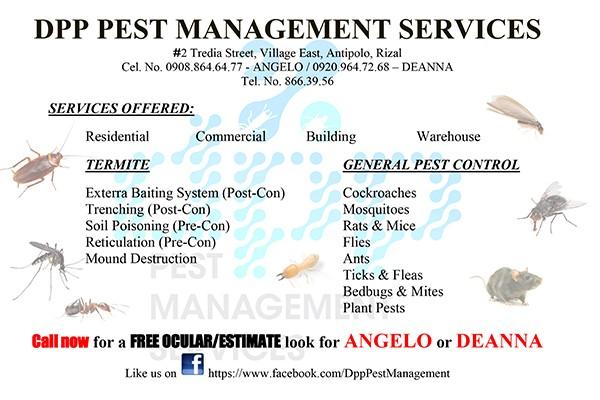 DPP Pest Management Services