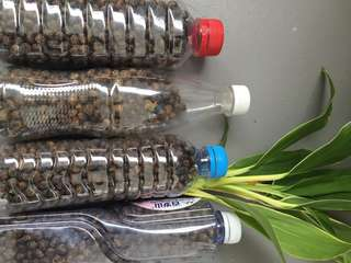 Natural fertilizer -dried rabbit poop