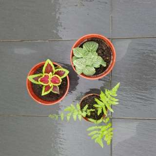 Promotion shade plants!!! 3 pots for $8.90