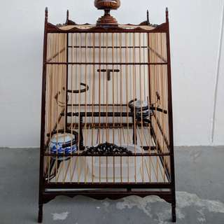 Jambul bird cage thai 17s