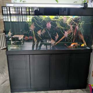 5ft Fish Tank With Cabinet include 17 autum fish
