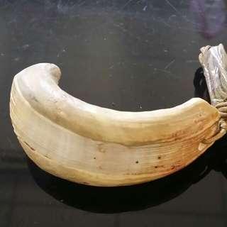 🚚 超大型獸牙