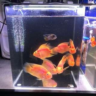Parrot fish tank