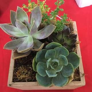 Cactus Plants and Bonsai