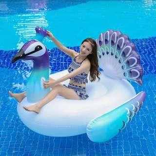 Peacock Swim Float for RENT