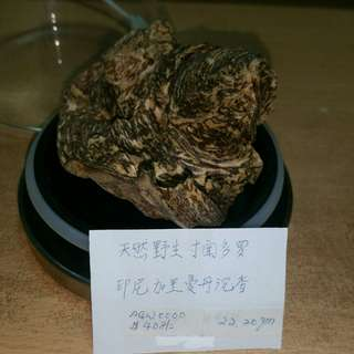 Agarwood collecters
