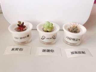 Promise Pot ( Cactus/ Succulents