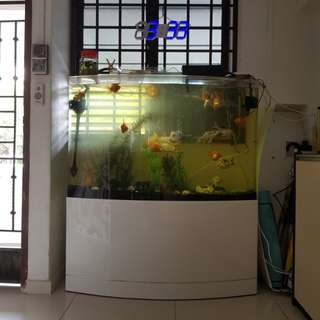 Fish tank for Sales