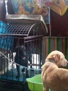 Dog cage - large