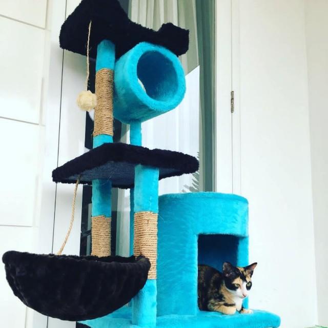 Cat condo,mainan kucing,cattoys