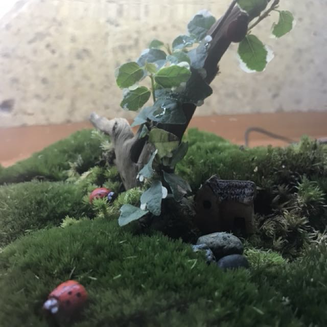 Large Moss Terrarium With Tree Bark Gardening On Carousell