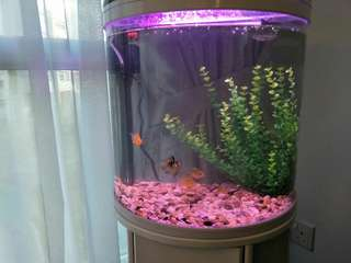 48cm Unique White Fish Tank
