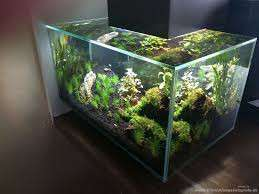 Trading Fluval Edge tank for 3FT