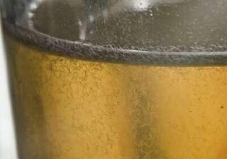 Vinegar eel