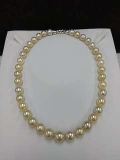 South Sea Pearl Necklace with Silver Clasp