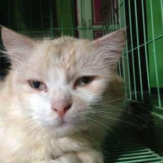 Kucing Persia (BOLEH NEGO)