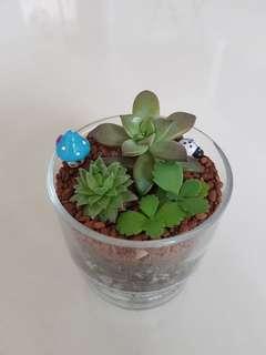 Succulent Terrarium for gift!