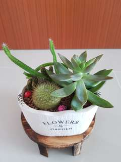 Succulent Plant & cactus for sale!